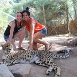 Get up close and personal with Cheetahs or another smaller species of African cats