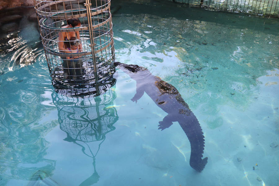 Go cage diving with crocodiles