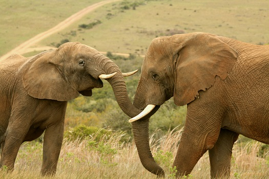 A Safari you will never forget!